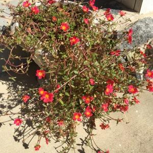 Gardening Flowers 101
