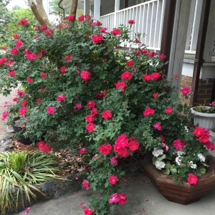 Gardening 101- Flowering Plants